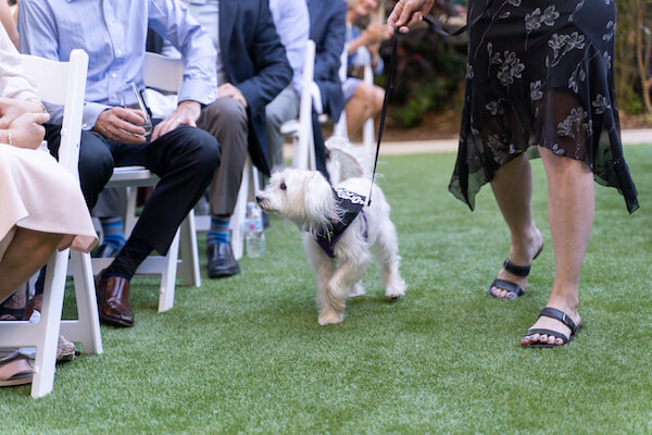 St Petersburg wedding - St Petersburg intimate wedding- St Petersburg wedding planner - dog in wedding ceremony