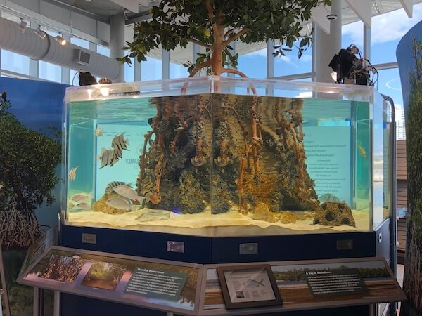 St Pete Pier - Tampa Bay Watch - Tampa Bay Watch Discovery Center - interactive display of local aquatic species