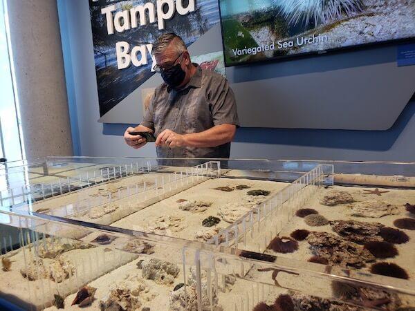 St Pete Pier - Tampa Bay Watch - interactive exhibits - tanks of local aquatic life - Mark Kingsdorf