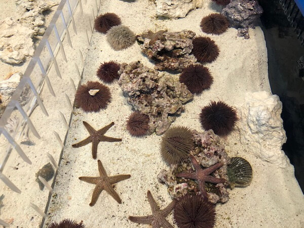 St Pete Pier - Tampa Bay Watch - Tampa Bay Watch Discovery Center - tanks of starfish and anemone