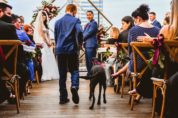 Couple watching as their puppy is escorted down the aisle of their St Pete rooftop wedding ceremony